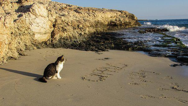 Beach, Cove, Cat, Sea, Sand, Scenery, Cyprus