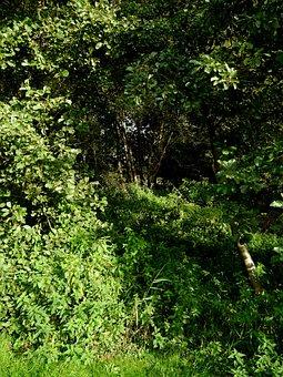 Wilderness, Green, Jungle, The Away, Tree, Grass