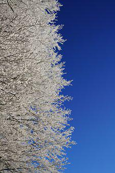 Winter Forest, Trees, Hoarfrost, Aesthetic, Branches