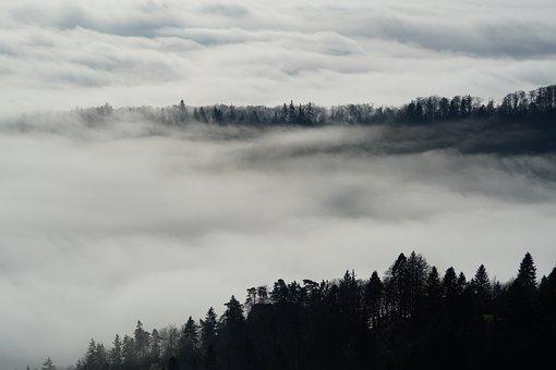 Fog, Nebellandschaft, Forest, Trees, Belchenflue, Jura