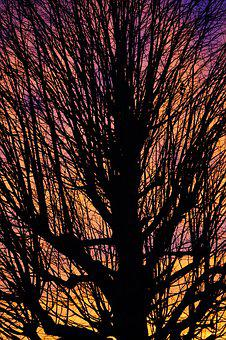 Aesthetic, Branches, Tribe, Solitary Tree, Sunset, Sky