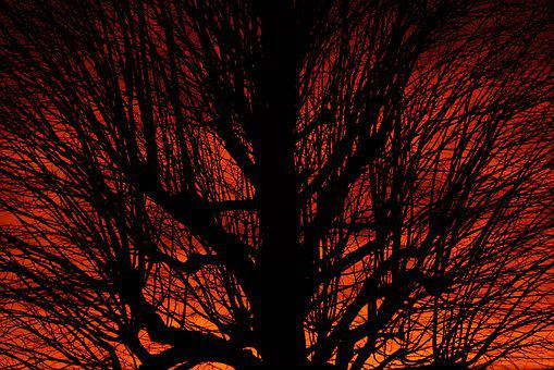 Crown, Aesthetic, Sunset, Tree, Branches, Tribe