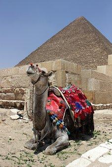 Egypt, Cairo, Eastern Pyramid, Camel, Arabic, Arabian