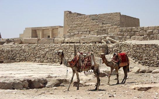 Egypt, Cairo, Eastern Pyramid, Camel, Camels, Arabic
