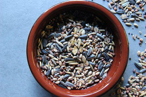 Bird Seed, Grains, Sunflower Seeds, Millet, Wheat, Feed