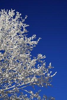 Tree, Hoarfrost, Winter, Winter Picture