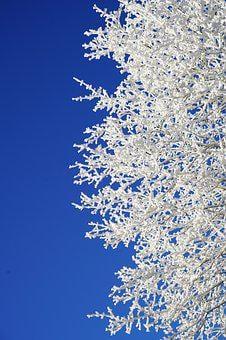 Aesthetic, Branches, Hoarfrost, Winter, Winter Picture