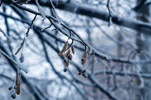 Casey, Leaf, Snow, Ice, Trees, Winter, Landscape, Frost