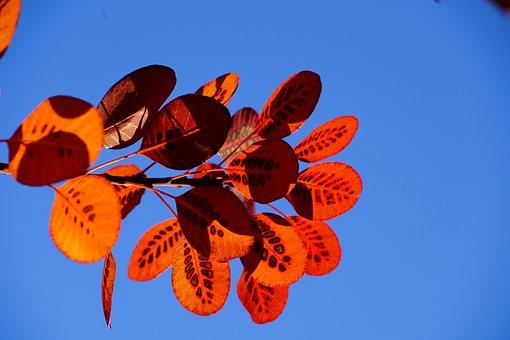 Fall Leaves, Autumn, Wig Brush, Leaves, Fall Foliage