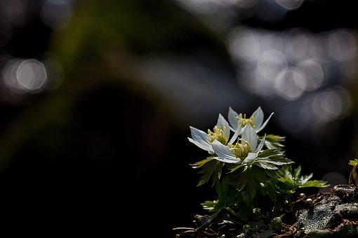 Modemipul, Wildflower, Cheongtaesan