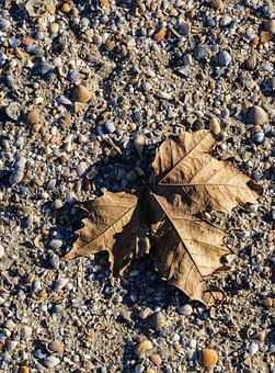 Leaf, Sand, Shadow, Clams, Light, Autumn, Nature