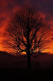 Single Tree, Solitary Tree, Sunset, Tree, Aesthetic