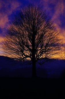 Solitary Tree, Sunset, Sky, Abendstimmung, Evening Sky