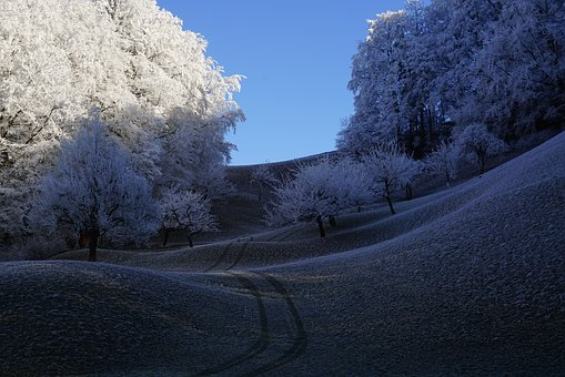 Trees, Hoarfrost, Wintry, Hills, Winter, Iced, Snow