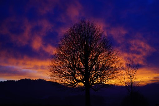 Sunset, Tree, Aesthetic, Branches, Tribe, Solitary Tree