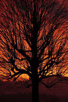 Tree, Sunset, Aesthetic, Branches, Tribe, Solitary Tree