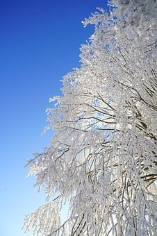 Tree, Hoarfrost, Branch, Iced, Crystal Formation, Snowy