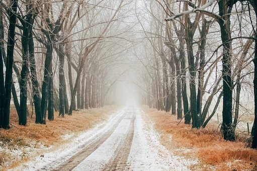 Canada, Road, Drive, Travel, Tire Tracks, Trees, Winter