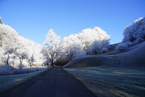 Trees, Road, Wintry, Hoarfrost, Winter, Iced, Snow