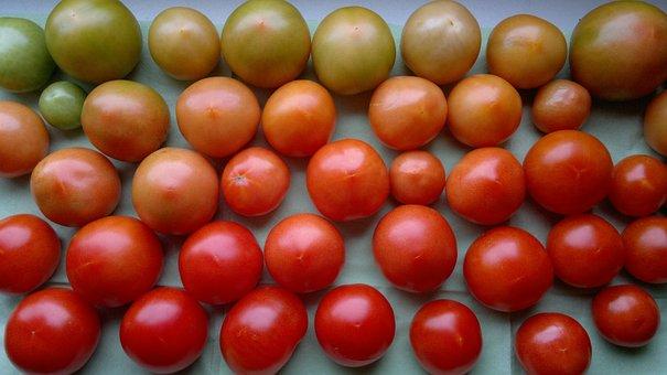Tomatoes, Red, Green, Vegetables, Food, Vegetarian