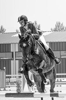 Horse, Jockey, Sport, Animal, Racing, Action