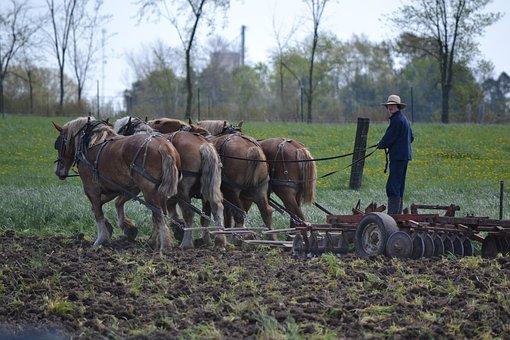 Horses, Mennonites, Man, Amish