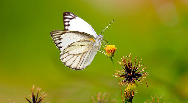 Butterfly, Bug, Insect, Animal, Garden, Wing, Wild