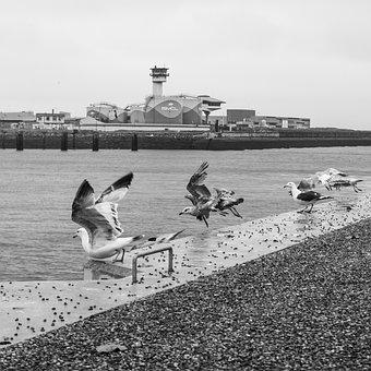 Water, Bank, Port, Maritime, Birds, Seagull