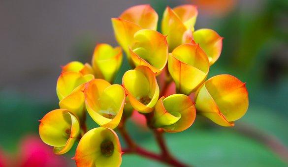 Flowers, Flora, Nature, Blossom, Natural, Garden, Bloom