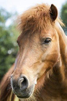 Animals, Nature, Horse, Wild, Wildlife, Natural, Live
