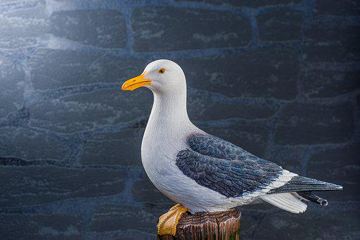 Seagull, Pile, Stone Wall, Plumage, Martim, Close