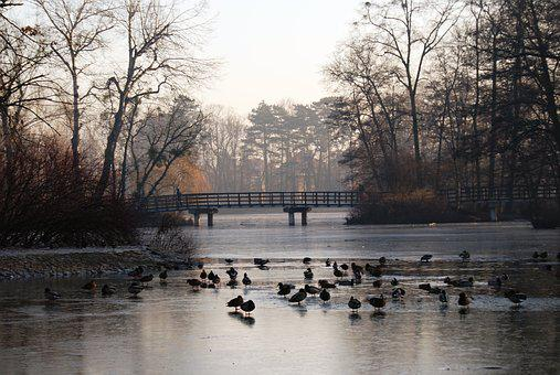 Park, Ducks, Pond, Duck, Bird, Wild Birds, Water Bird