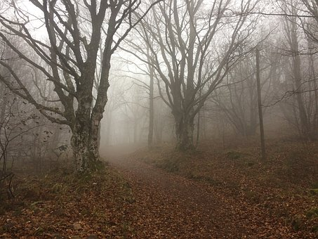 Hartmannswillerkopf, Vosges, Alsace, War, Autumn, Fog