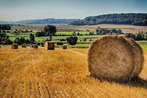 Straw, Fields, Field, Agriculture, Hay, Nature, Pre
