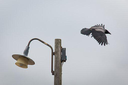 Crow, Bird, The Lamppost, Flying, Wing, Lamp