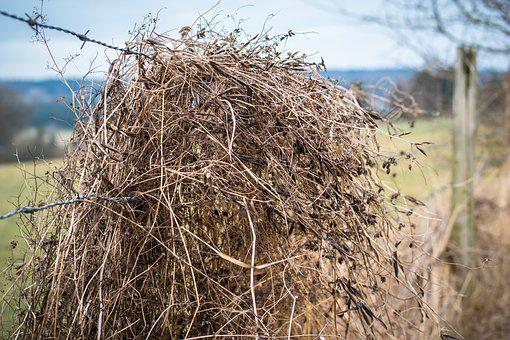 Barbed Wire, Straw, Grass, Fence, Dry, Depend, Karg