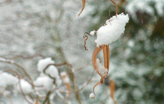 Winter, Snow, Wintry, White, Cold, Tree, Winter Bushes