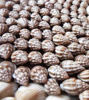 Sea, Shells, Nature, Summer, Beach, Ocean, Travel
