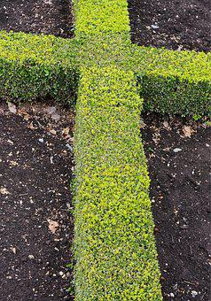 Cross, Hedge, Crucifix, Box, Knot, Gardening, Formal