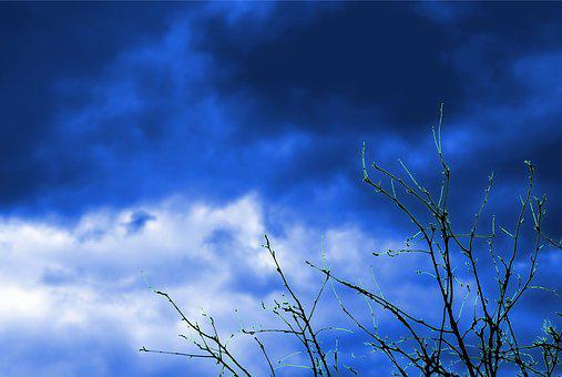 Sky, Clouds, Tree, The Bushes, Branches, Cloud Cover
