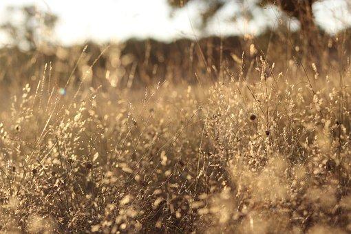 Grass, Field, Prado, Prairie, Soil, Forest, Landscape