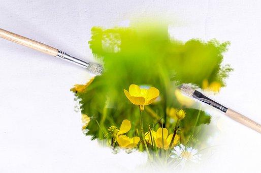 Paintbrush, Outdoor, Flower, Flowers, Sunlight
