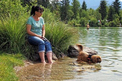 Person, Human, Animal, Dog, Kneippen, Treading Water