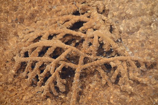 Tree Branch, Travertine, Mammoth Hot Springs