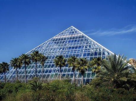 Galveston, Texas, Moody Gardens, Palm Trees