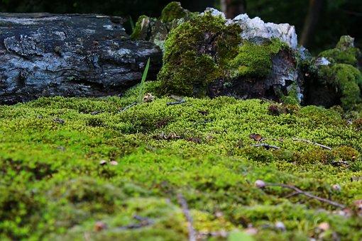 Moss, Mossy, Ground, Nature, Decoration, Close, Green