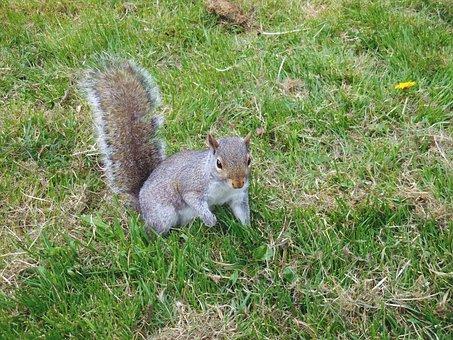 Squirrel, Animals, Nature, Forest, Creature, Wildlife