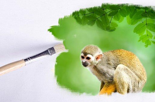 Paintbrush, Outdoor, Monkey, Animals, Animal, Wallpaper