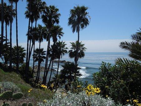 Palm, Palm Trees, Leaf, Sea, Ocean, Water, Palms, Sky