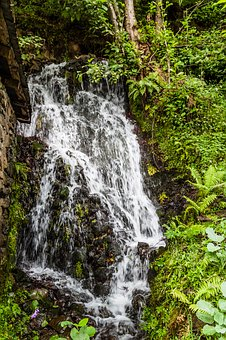 Waterfall, Water, Nature, Tree, Green, The Leaves Are